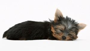 ph_puppy07
